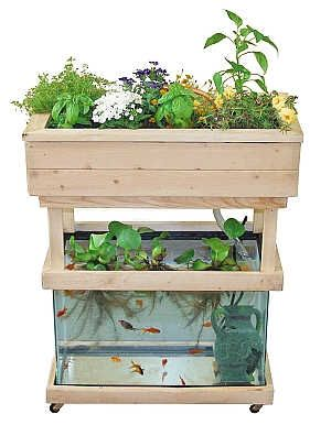 http://www.grobergreen.com/build-a-mini-aquaponic-system/