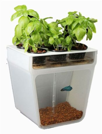 http://www.core77.com/posts/23893/the-aquaponics-garden-a-self-cleaning-fishtank-that-provides-fresh-herbs-23893