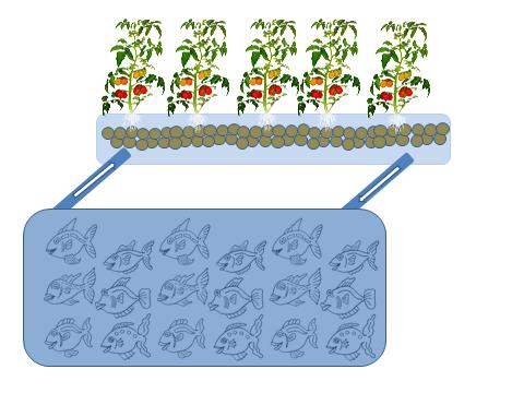 schéma aquaponie