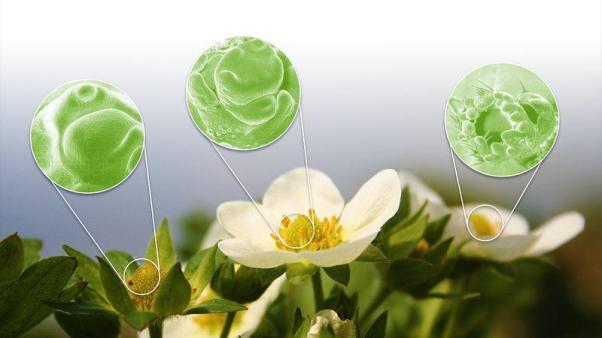 plantalogica-flower-mapping-describing-flower-development-feat