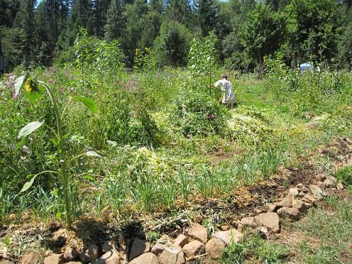 Polyculture au sein d'un même site (Crédit photo @ Fishermansdaughter Flickr)